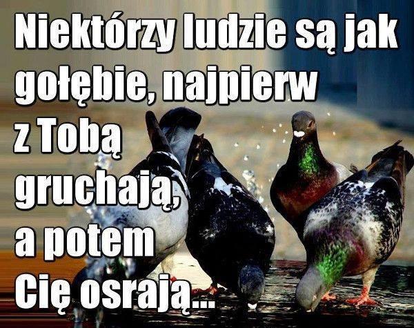 Niektórzy z nas są jak gołębie