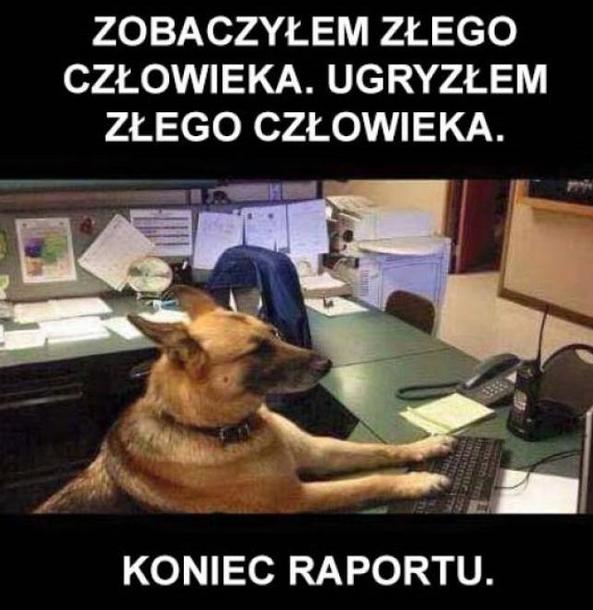 Raport xD