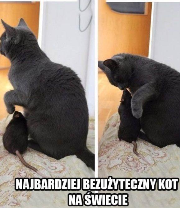 Najbardziej bezużyteczny kot