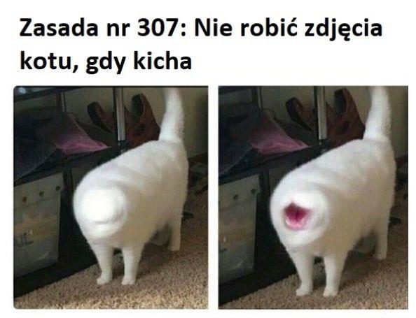 Kichający kot