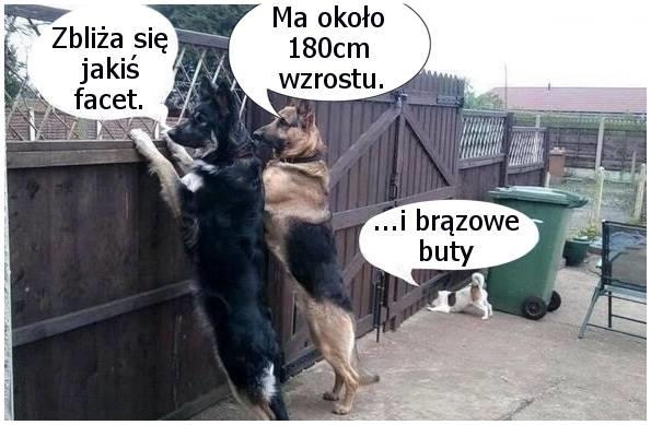Psia narada