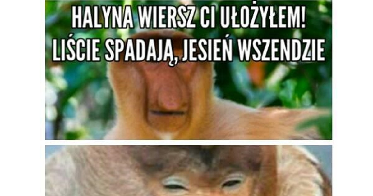 Jesienny Wierszyk Janusza Xd Ehumorpl Humor Dowcipy