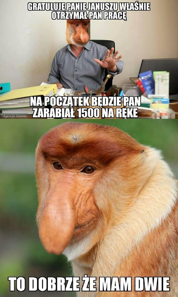 Janusz otrzymał pracę