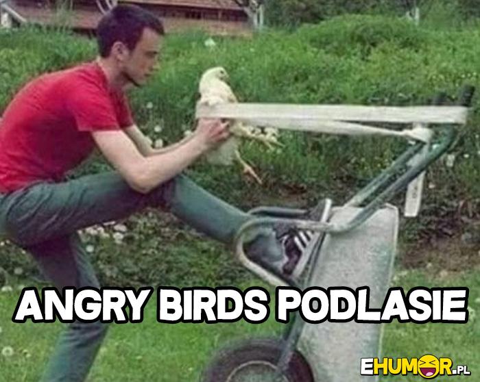 Angry Birds Podlasie