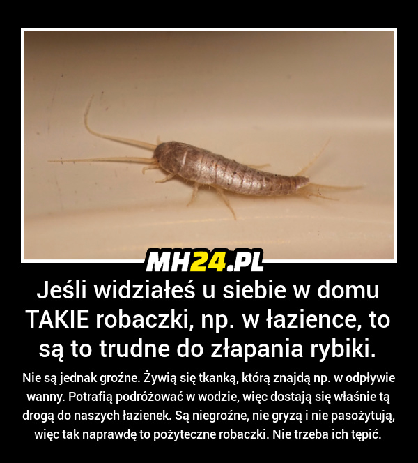 Jeśli widziałeś takie robaczki