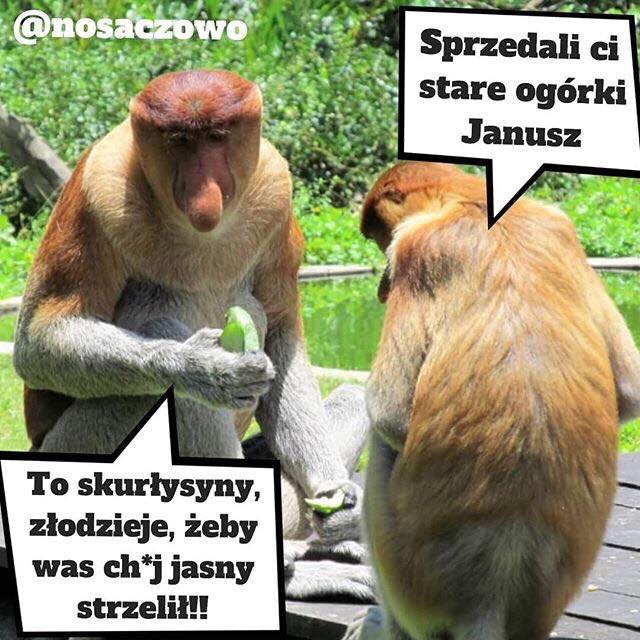 Kiedy Januszowi sprzedali stare ogórki