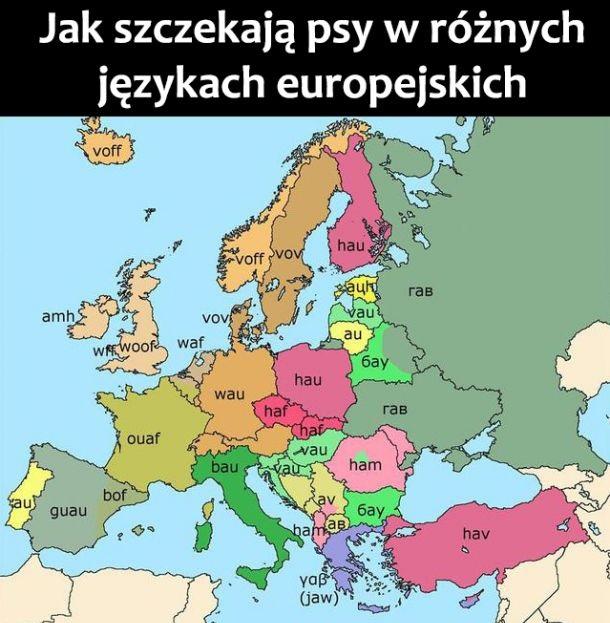 Jak szczekają psy w Europie