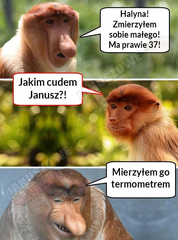 Janusz sobie zmierzył…