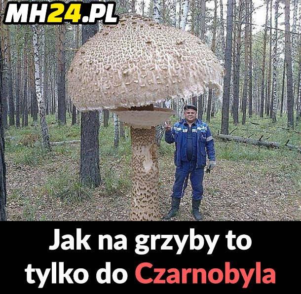 Czarnobylskie grzybki xD